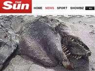 Fotos de animais em maio: carcaça de 'monstro' é achada