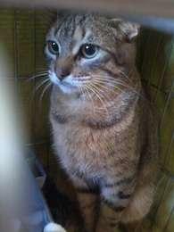 O gato teve a argola removida e deve ser castrado Foto: Arquivo Pessoal / Divulgação