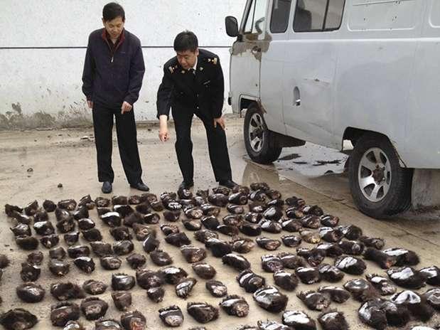 Funcionários da alfândega contabilizam a quantidade de patas apreendidas Foto: Reuters
