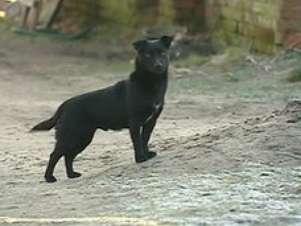 Segundo a família da menina, ela e o cão sempre foram inseparáveis Foto: EVN / BBCBrasil.com