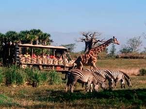 Animal Kingdom Foto: Divulgação