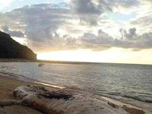 Segundo as equipes que analisaram a baleia, ela já chegou morta à praia Foto: Namidia Comunicação / Divulgação