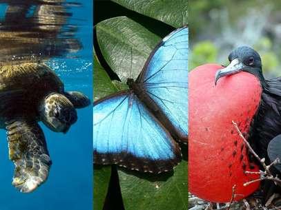 Vida selvagem caribenha é defendida pelos parques nacionais, sempre abertos à visitação dos turistas Foto: Shutterstock