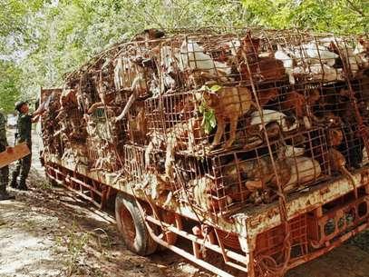 Soldados tailandeses inspecionam veículo que carrega cães em gaiolas na província de Bueng Kan Foto: AFP