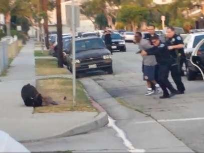 Frame de vídeo mostra o momento em que o cão é morto pela polícia Foto: Reprodução