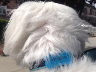 Dispositivo é pequeno e acoplado à coleira do cachorro, para o conforto do bicho Foto: Divulgação