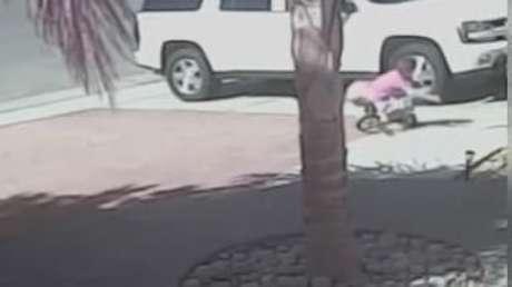 Criança atacada por cão tem a vida salva por gato da família