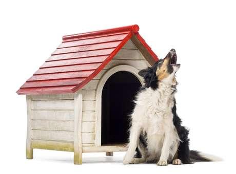Em casos extremos, uma pessoa pode entrar com uma ação contra seu vizinho por conta de barulhos causados pelo cachorro Foto: Eric Isselee/Shutterstock