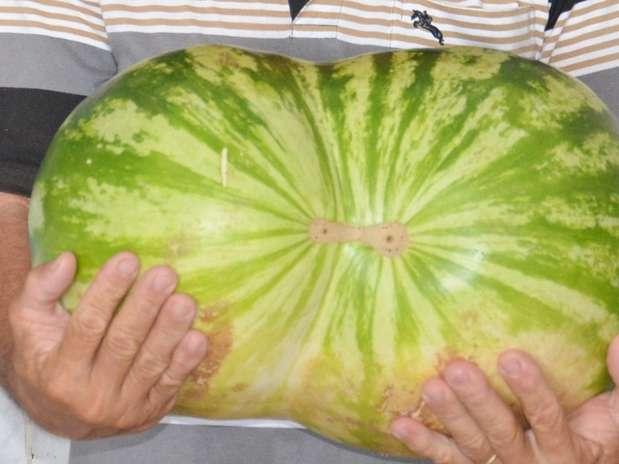 Comerciante ganhou a fruta de presente de um amigo Foto: Charley Garrido / vc repórter