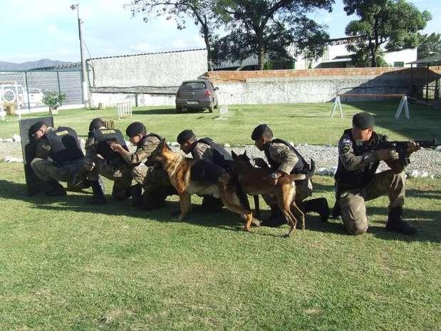 Segundo a PM, os cães dispensados pela corporação têm entre 9 meses e 3 anos e não se adaptaram às funções da atividade policial Foto: Divulgação