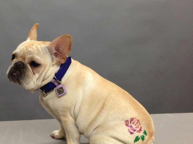 Atatuagempara cachorro éfeitacom tinta com pequenos cristais, aplicada sobre os pelos do animal Foto: Divulgação