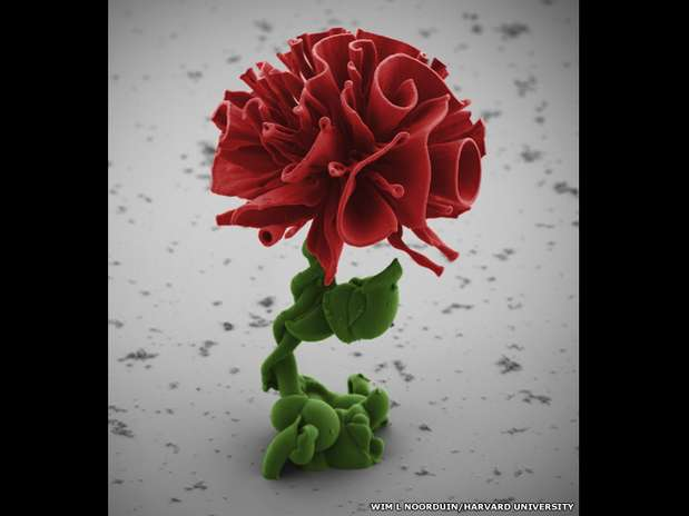 Cientista usa elementos químicos para criar formas de flores