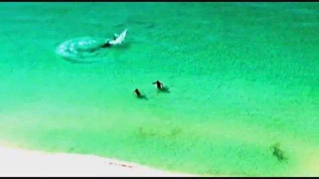 Vídeo mostra tubarão nadando bem perto de banhistas