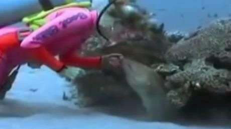 Mergulhadora faz amizade com moreia em aquário na Flórida