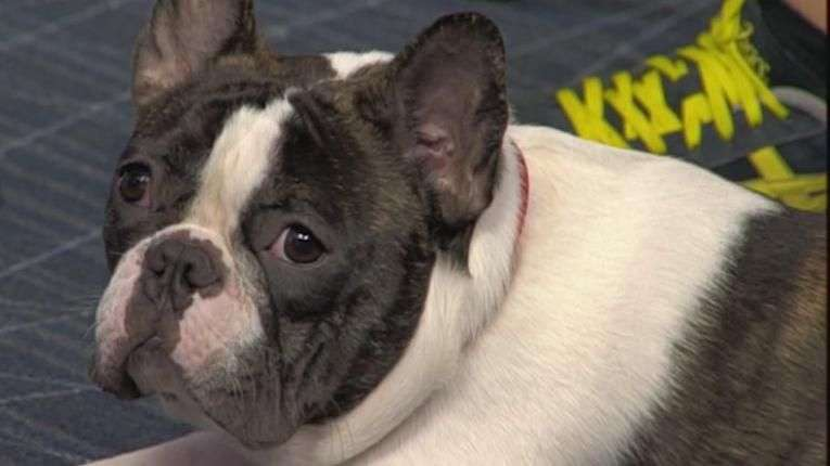 "Cães ""rebeldes""? Psicólogo canino dá dicas de como treiná-los"