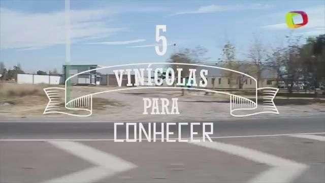 Mendoza, terra do vinho : conheça 5 vinícolas para visitar