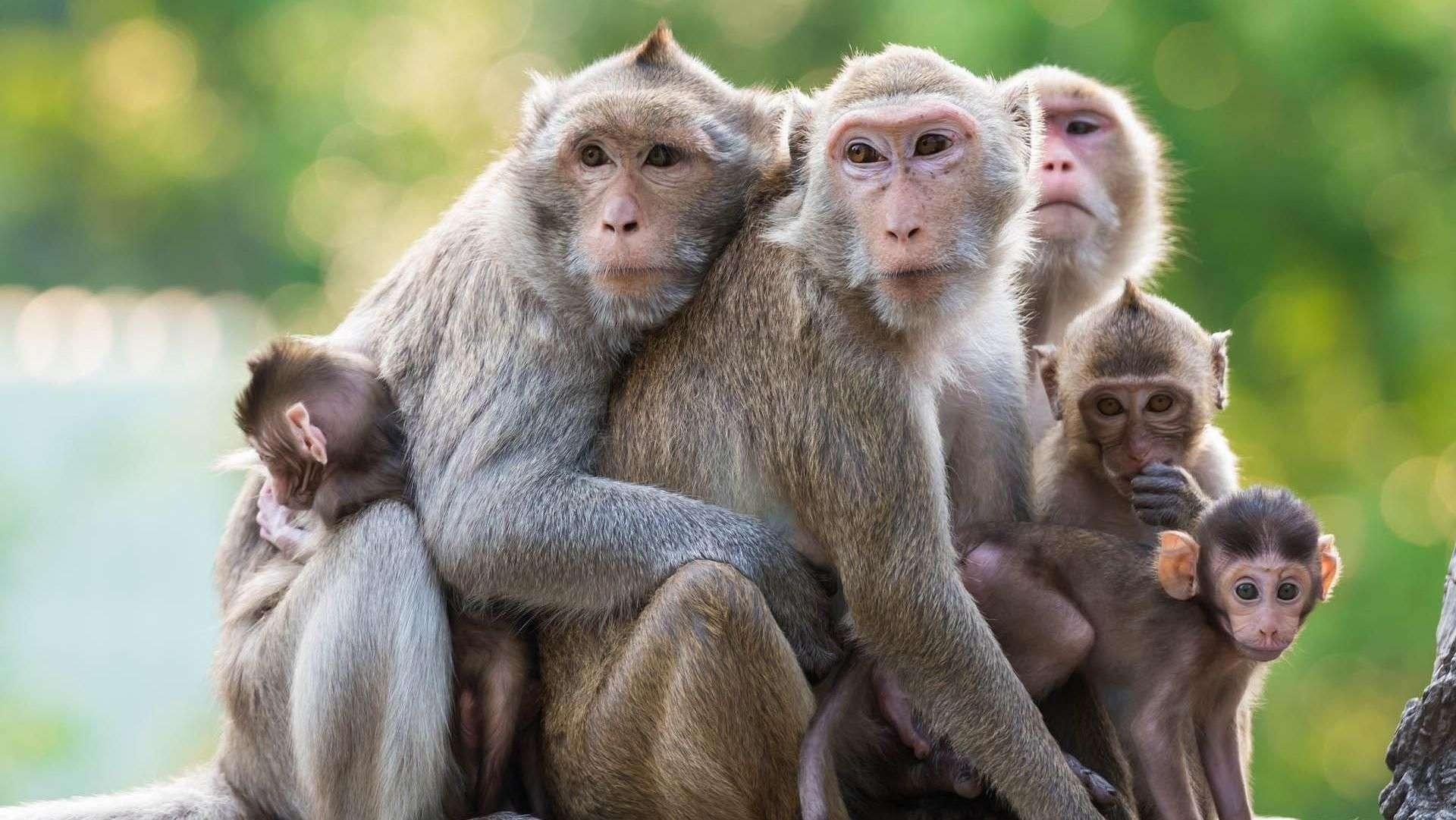 Macacos contra o autismo