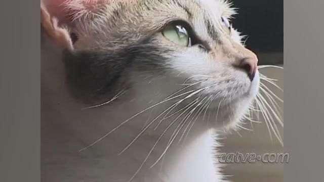 Gatos para doação participam de ensaio e chamam a atenção na internet