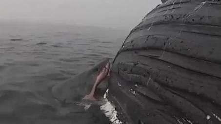 Câmera flagra tubarão comendo carcaça de baleia-jubarte na Califórnia