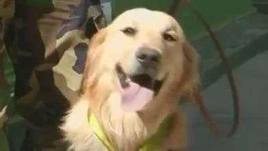 Cães de polícia ganham festa por trabalho antidrogas