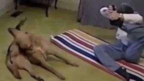 Cão imita movimentos da dona em sessão de yoga