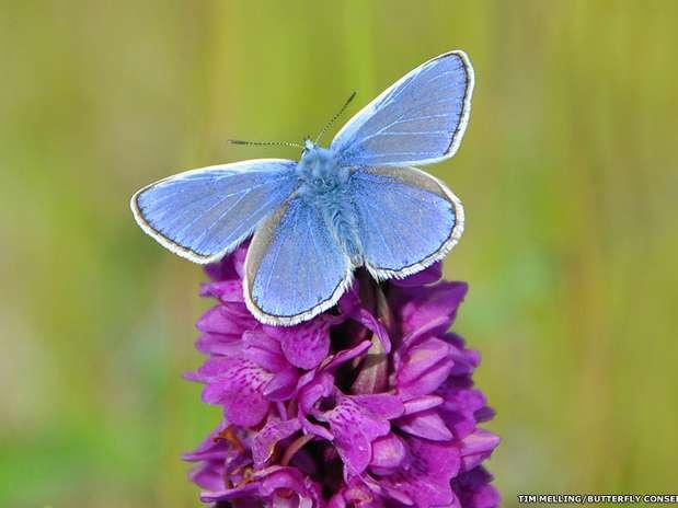 Foto: Butterfly Conservation/Divulgação