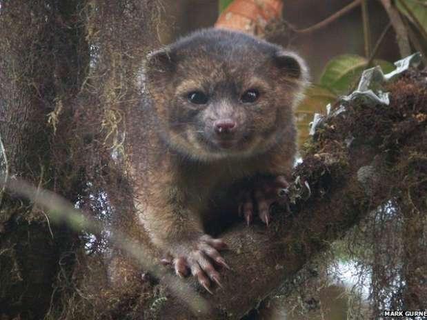Foto: Mark Gurney/BBCBrasil.com